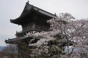 熊谷寺と桜の写真