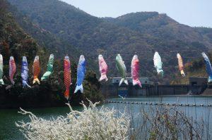 宮川内ダム公園のこいのぼり
