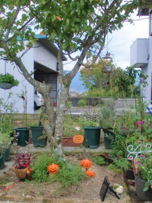 プティクールのお庭の写真