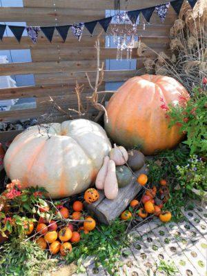 ラ・プリマヴェーラのお庭の写真